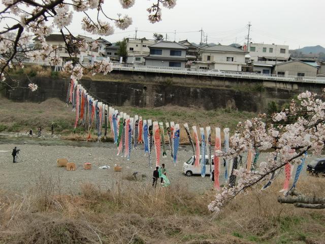 紀伊丹生川に渡され、粛々と小雨に濡れる鯉幟