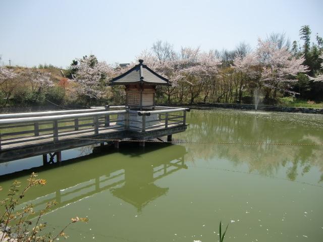 人になついていた鴨がいなくなった浮御堂の池