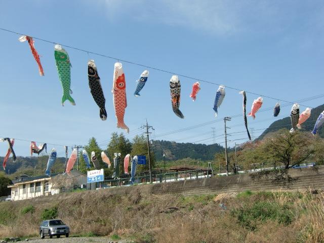 春風を受け紀伊丹生川の空をおよぐ鯉幟