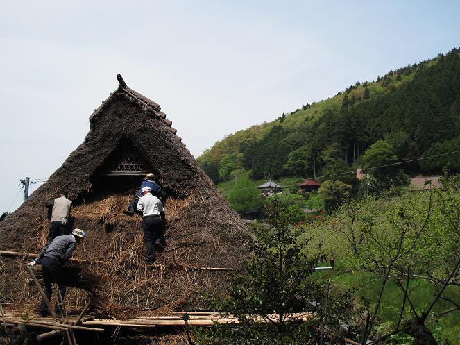 屋根裏に保存していた山萱で葺き替える「紀州屋根屋」さん