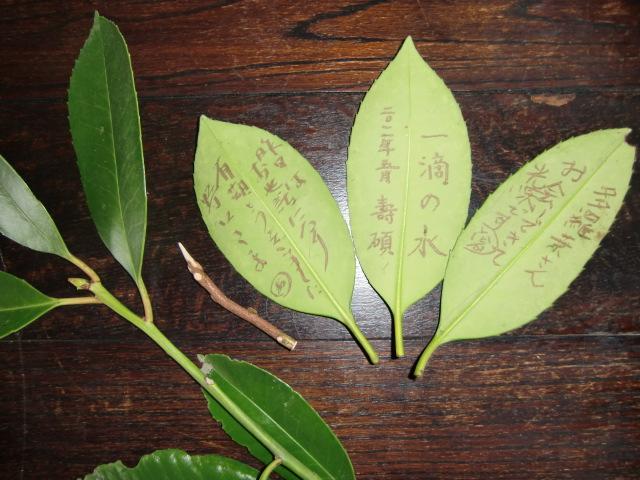 「学びの森」で多羅葉の木について説明する田中さん