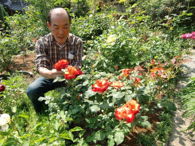 バラが美しい河合さんの庭園