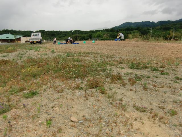 ひまわり畑にする「紀望の里」東隣の土地