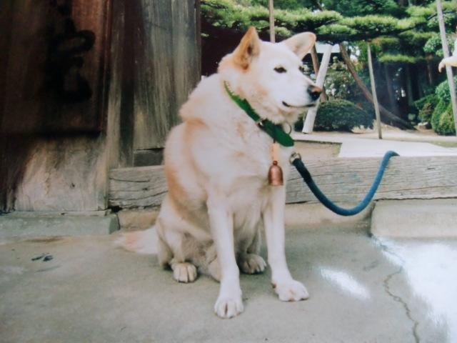 在りし日の高野山・案内犬ゴン(慈尊院で)