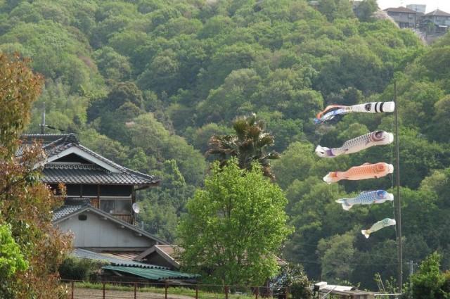 新緑の家に鯉のぼり、日本の風景ここに