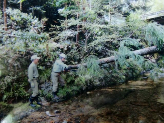 玉川峡の倒木を整理する会員たち