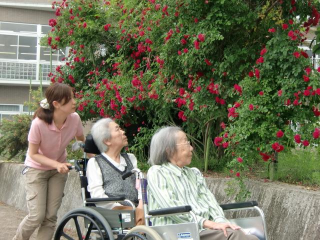 目が覚めるように真っ赤に咲いたスロープの垣根のバラの花