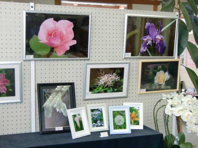 約100点が飾られた「蝶と花」写真展