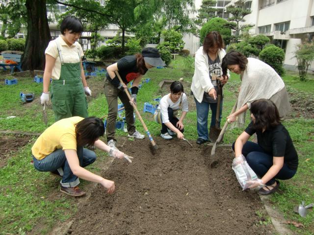 橋本小学校の校庭にひまわりの種をまく中村さんと保護者たち