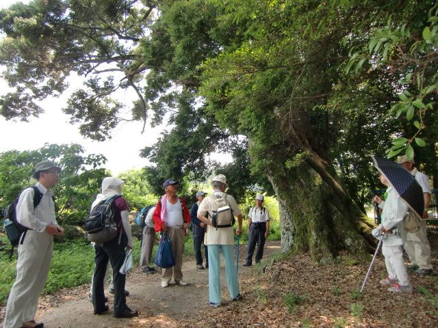 「中将の森」の椎の巨木の下で中将姫伝説を聞く参加者ら