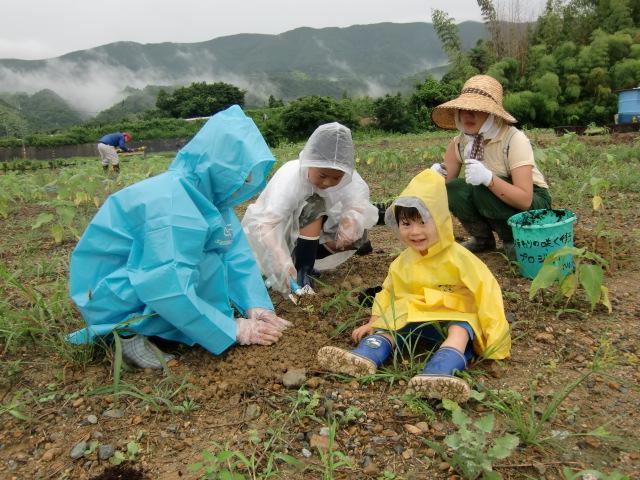 ひまわりの苗を植える家族連れと中村さん(右後ろ)