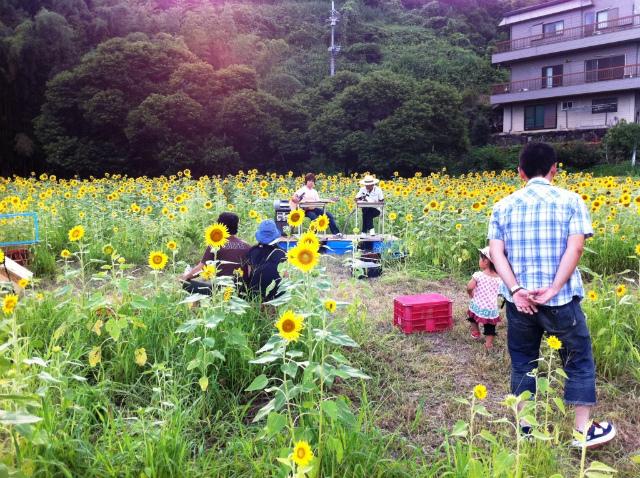 ひまわり畑でギターを演奏する白石さん(左)と大野さん