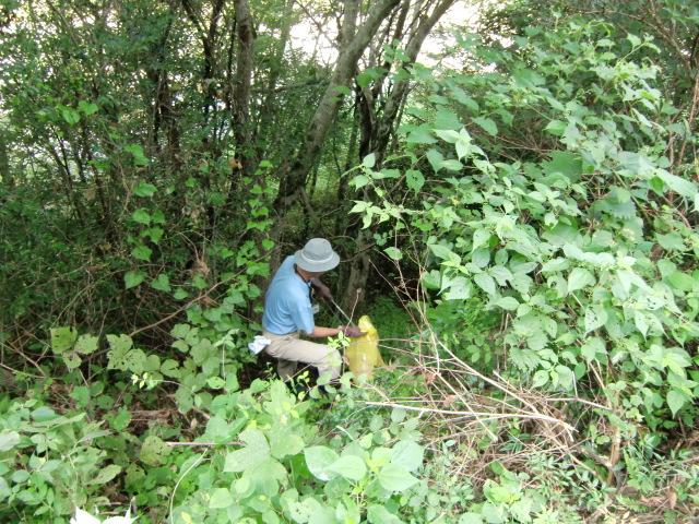 雑草の茂みに分け入ってごみ拾いに汗する参加者