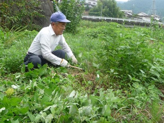 橋本川〝草刈り奉仕〟20年~小西さんに実行章