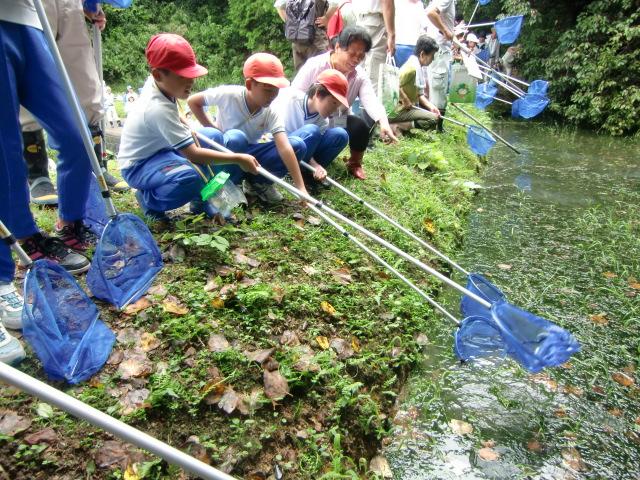 棚田や池に水性生物いっぱい~児童ら採集し歓声
