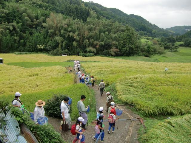 水生生物の採集に棚田の道を行く児童たち