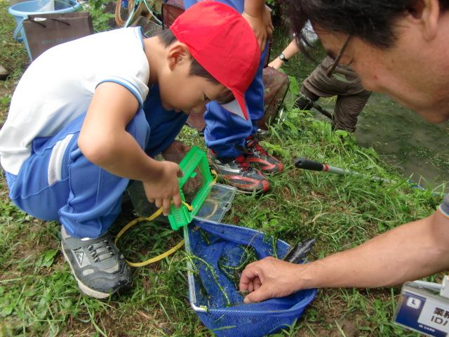 網で水性生物をとる柱本小学校の児童たち
