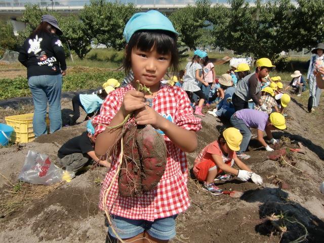 大きなサツマイモを掘り当てた女の子
