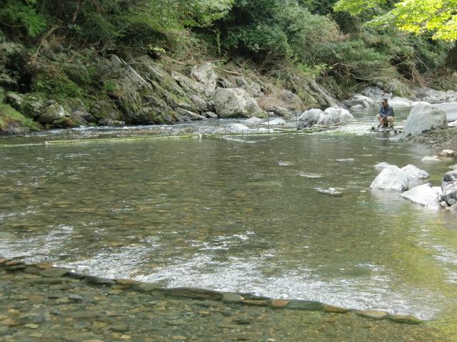 上流から見た玉川の真竹の簗