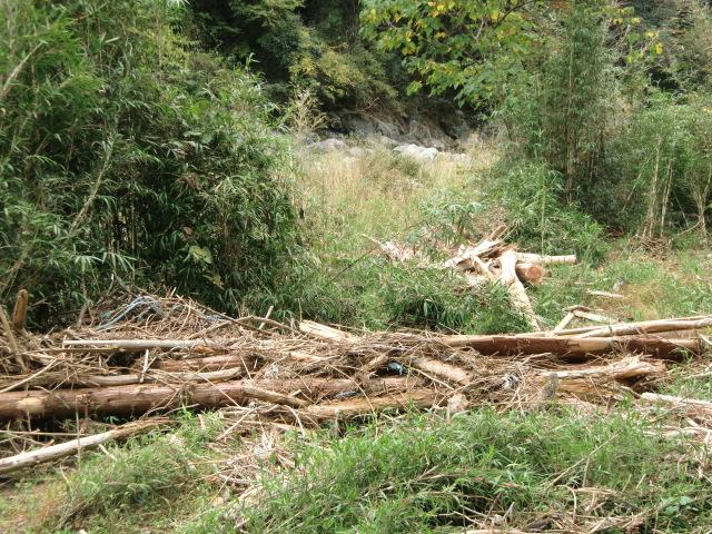 根こそぎ流され川原に漂着した流木(玉川峡で)