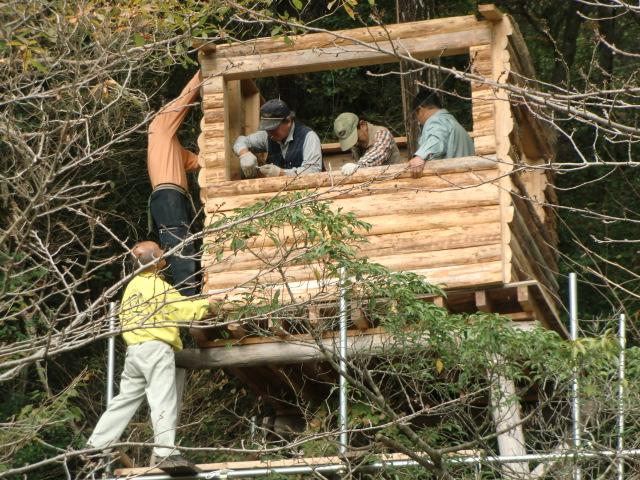 地上7メートルで〝ツリーハウス〟 の組み立て作業をする会員たち