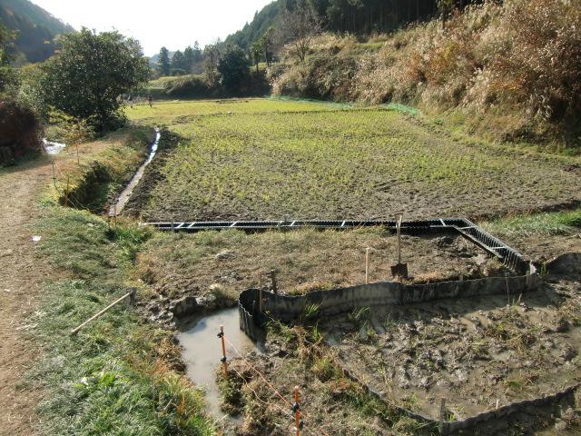 橋本市柱本の芋谷川わきの棚田に設けられた水田魚道