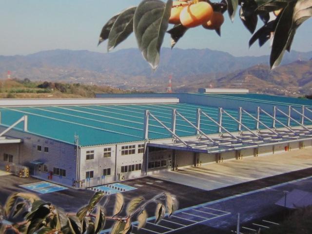 日本一の柿産地に巨大選果場~〝食の安全〟誓う