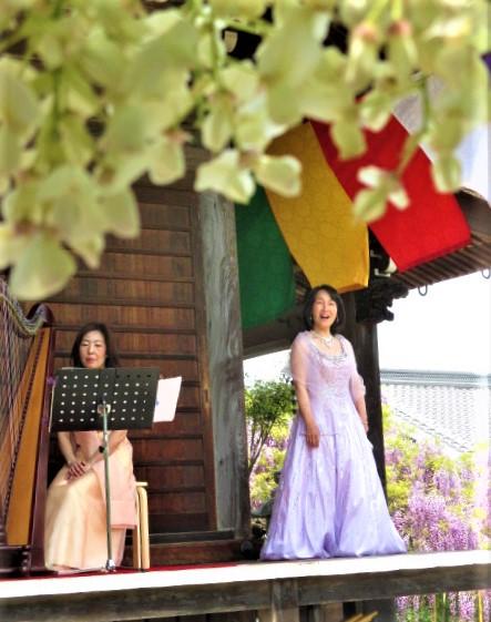 藤の花よ小鳥たちよ♪子安地蔵寺で尾上利香さん歌う
