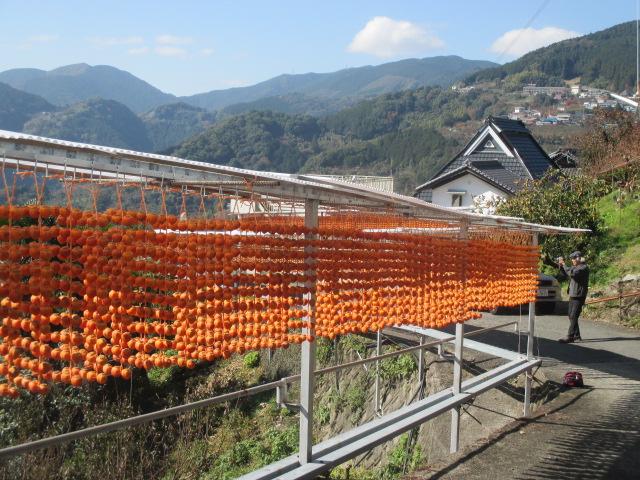 串柿の玉簾♪山里に輝く~京奈和~鍋谷道路も便利に