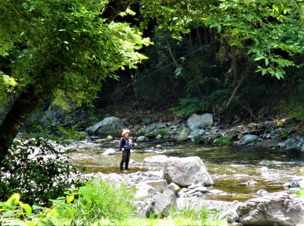 玉川峡でアユ釣り解禁♪渓流に緑豊か~子供ら川遊び