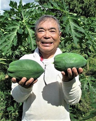 風味よし「恋のパパイヤ茶」♪森岡さん収穫加工販売