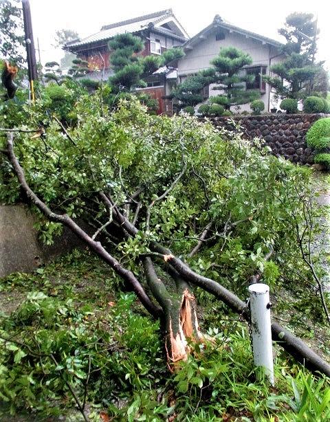 台風21号!倒木や停電~被害少なく市民ほっと