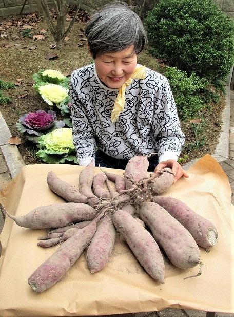 なんと19個のサツマイモ団!料理講師大前さん栽培