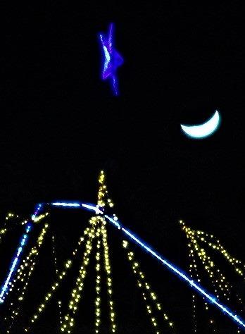 メタセコイヤの星に三日月輝く♪1万個の電飾大好評