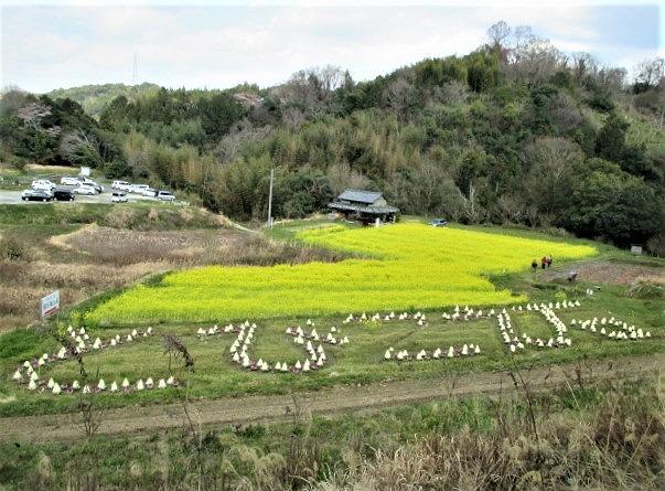 春うらら♪真土万葉の里~葉牡丹と菜の花の競演