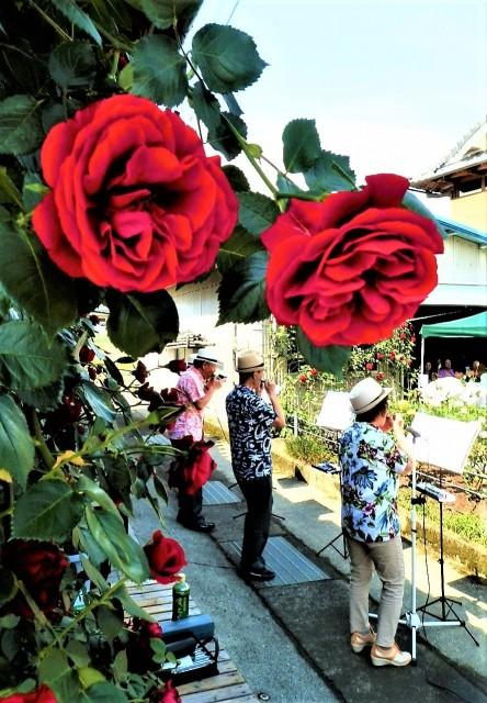 バラ園でハーモニカ&合唱楽しく♪橋本の岡本さん方