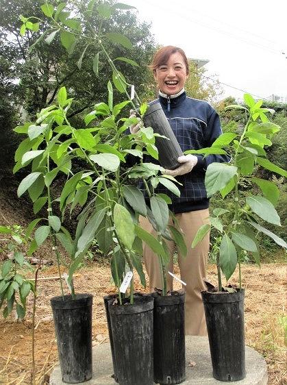 アボカド&バナナ美味しいよ♪橋本の施設が苗木植栽