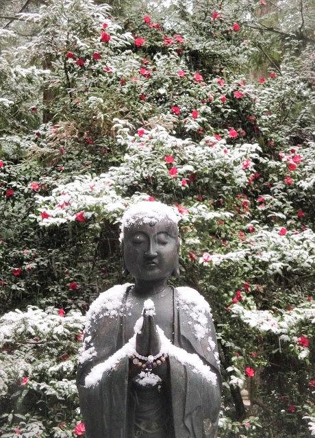 雪化粧♪水向地蔵と藪椿~高野山・大震災忘れまじ