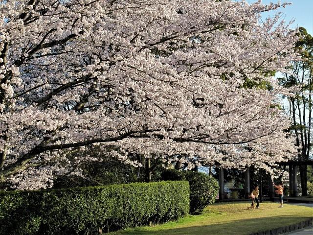 杉村公園・春爛漫♪テーブル写真展~志野で北森さん