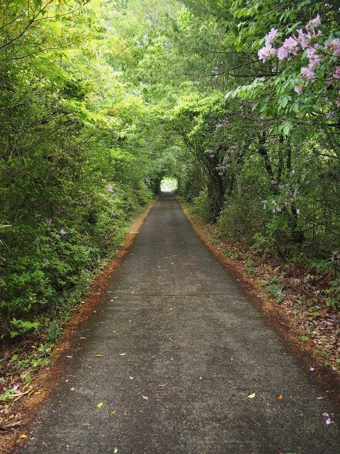 橋本・小原田にトトロの道!?〜心癒す緑のトンネル