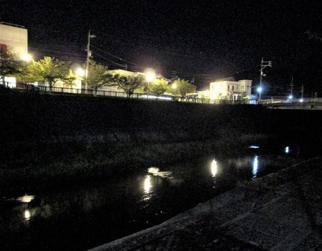 外灯に〝秋声〟湧き立つ♪橋本川のハナミズキ並木