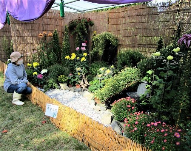 橋本の「菊花展」開幕♡来月上旬見頃〜鉢植え販売も