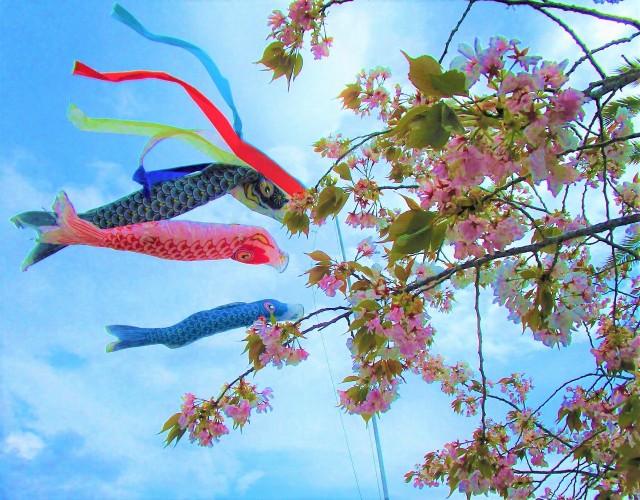 鯉幟&花見の食事楽しむ♡橋本・特養施設お年寄り