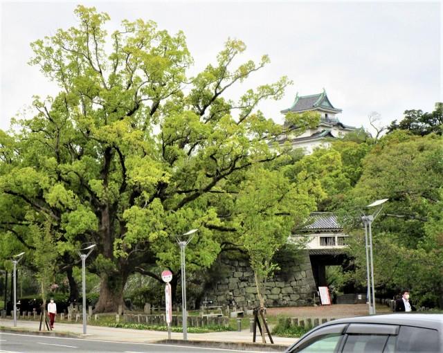和歌山城、新緑包む♡今や橋本の近く~ツツジも綺麗