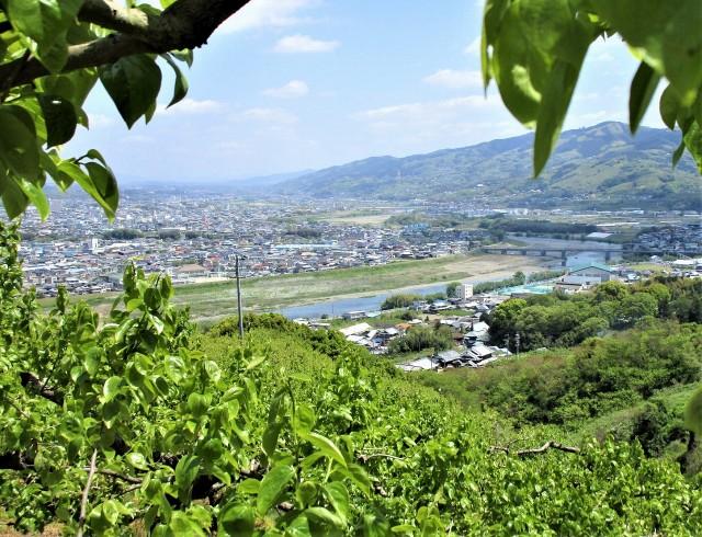 柿若葉しっとり、山河一望♡紀の川フルーツライン