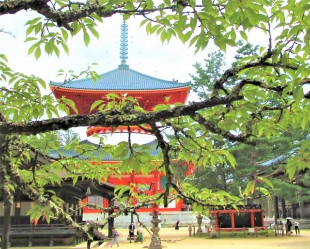 秋の社寺巡り楽しく♡高野〜山麓=アクセスバス発車