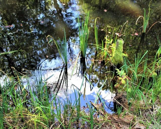水底に雲、芝生に木陰♡橋本・杉村公園の秋すすむ